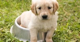 Barf für Welpen / Junghunde