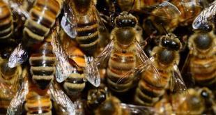 ein Schwarm Bienen