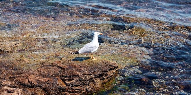 Meeresufer als Sinnbild