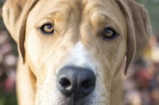 Nahaufnahme eines Hundesgesichts mit freundlichen Augen