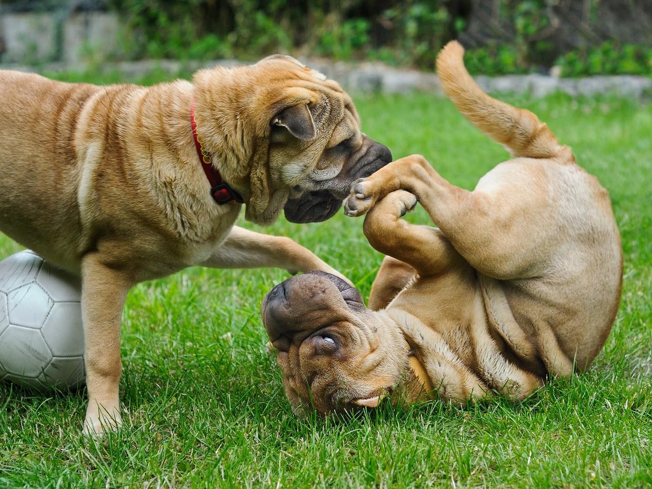 Urlaubsbetreuung für Hunde