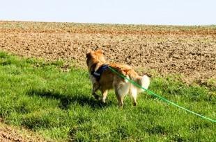 ein Hund von hinten als Sinnbild