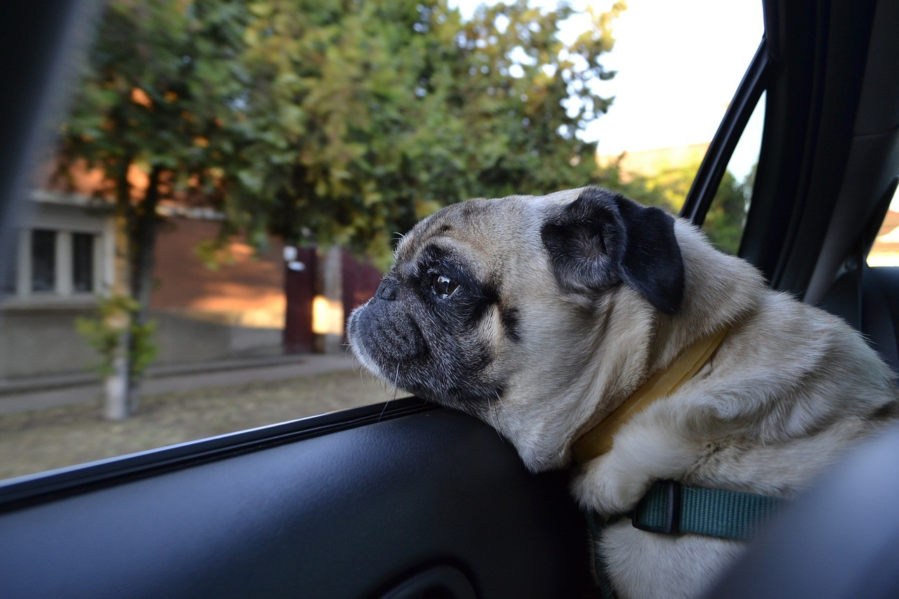 Wärmeentwicklung im Auto