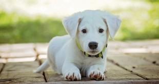 Überlegungen vor dem Hundekauf