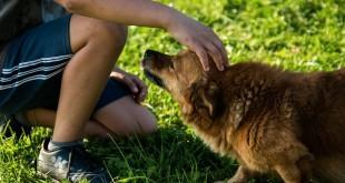 Sinnbild für einen zugelaufenen Hund