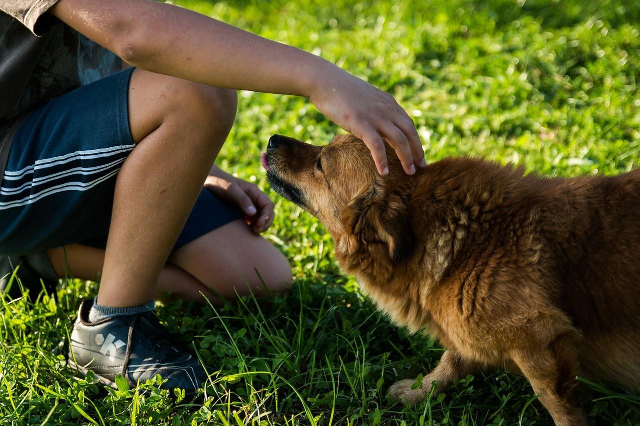 Hund gefunden / zugelaufen – was tun?