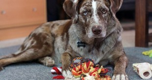 Vorbereitungen für den neuen Hund