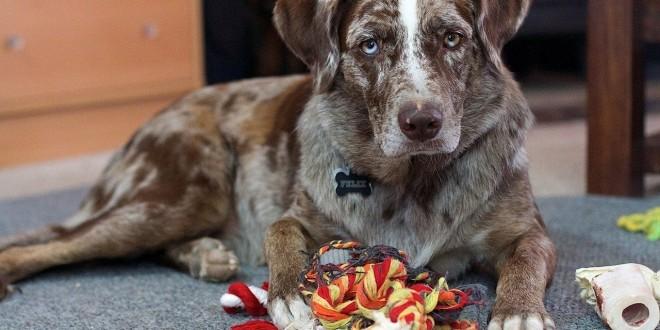 Ein Hund, der von seinem Spielzeug umringt ist