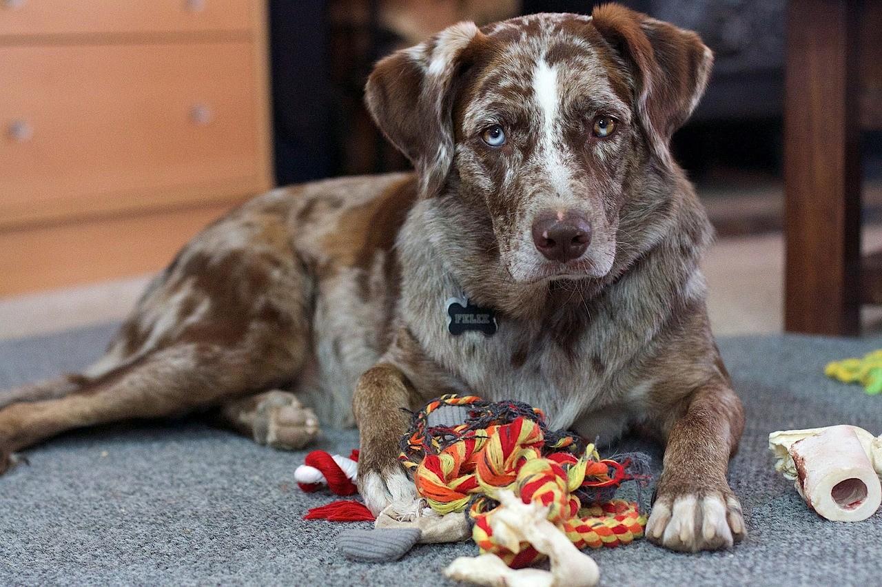 eiweißpulver für hunde
