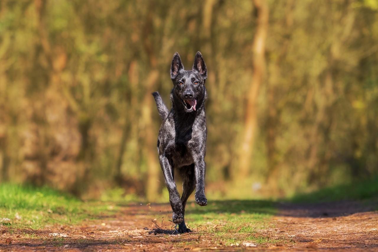 Ein Hund, der über einen malerischen Waldweg rennt