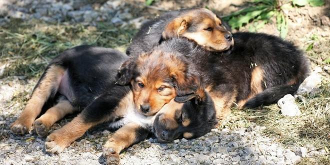 Drei süße kleine Welpen, die miteinander kuscheln