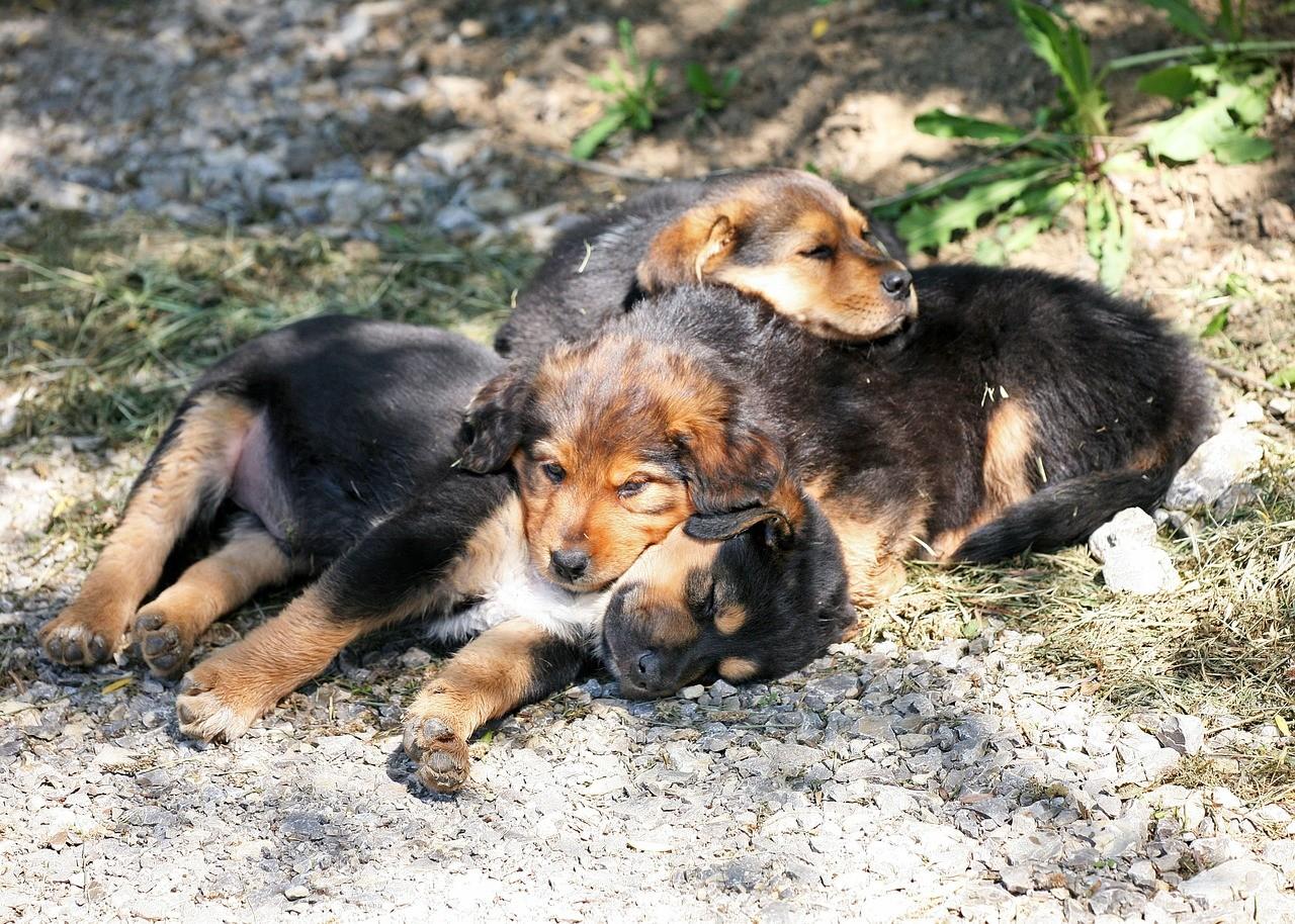 woher bekomme ich einen hund nicht alle vermittler sind. Black Bedroom Furniture Sets. Home Design Ideas