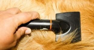 Eine Bürste im Fell eines blonden Hundes