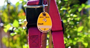 eine Hundesteuermarke an einem Halsband