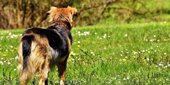 ein Hund von hinten mit Fokus auf die Hüfte