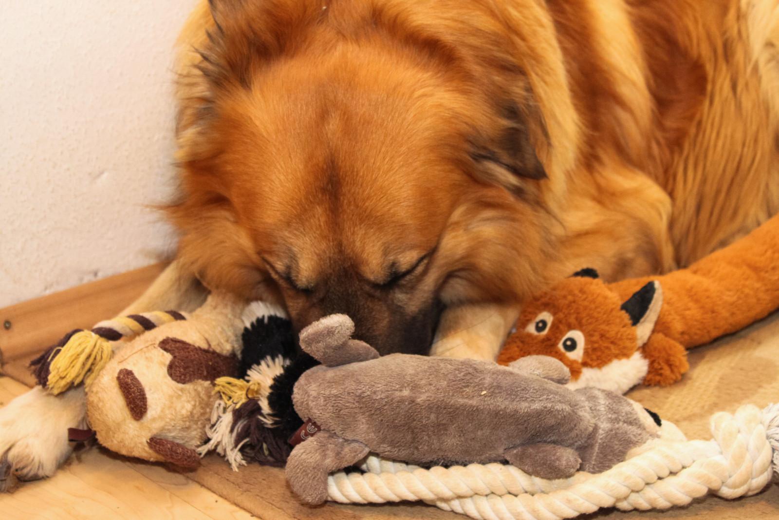Schadstoffe im Hundespielzeug