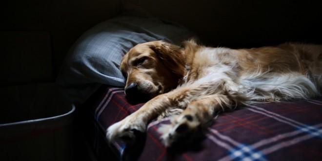 ein Hund liegt im Bett