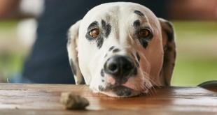 bettelnder Hund