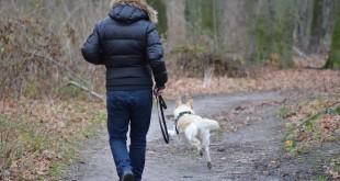 Mein Hund hat eine Schilddrüsenüberfunktion – was ist das?