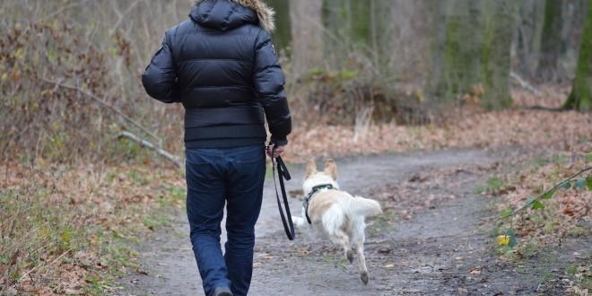 ein aktiver Hund als Sinnbild für die Schilddrüsenüberfunktion