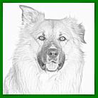Vitaler Hund