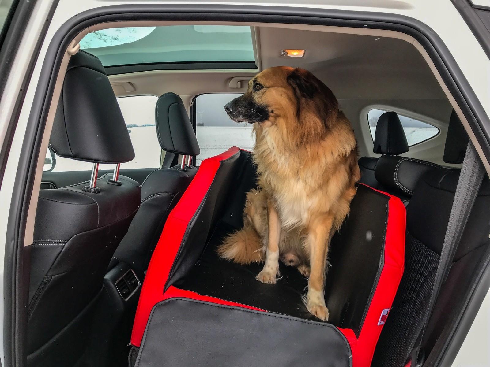 Die Travelmat im Auto und mit Hund