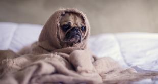 Wenn der Hund mal einen schlechten Tag hat …