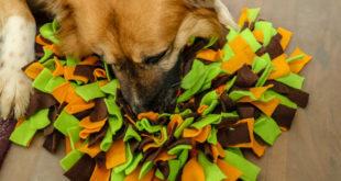 Erfahrungsbericht: Schnüffelteppich für Hunde