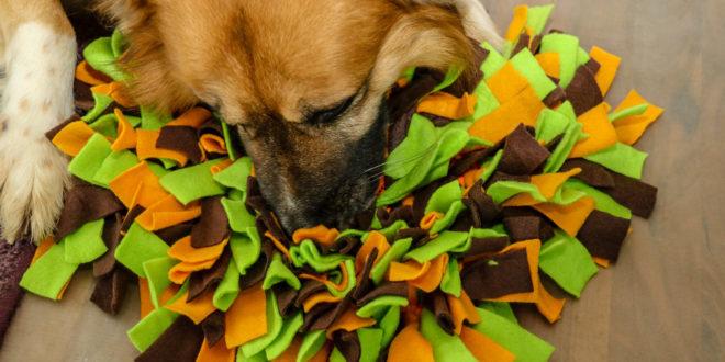 Hund sucht im Schnüffelteppich