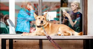 Schadet unsere Zeit am Smartphone der Beziehung zu unseren Hunden?