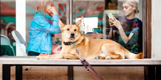 Hund liegt draußen dahinter eine Frau, die auf ihr Handy schaut