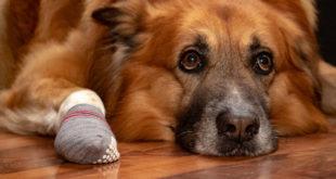 Erfahrungsbericht: Hundesocken mit Anti-Rutsch-Noppen