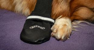 Erfahrungsbericht: Pfotenschuhe für Hunde