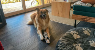 Mit Hund in den Urlaub – nicht ohne ein Spielzeug!
