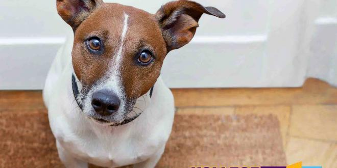 Aktionstag Kollege Hund: Tierfreundliche Unternehmen gesucht