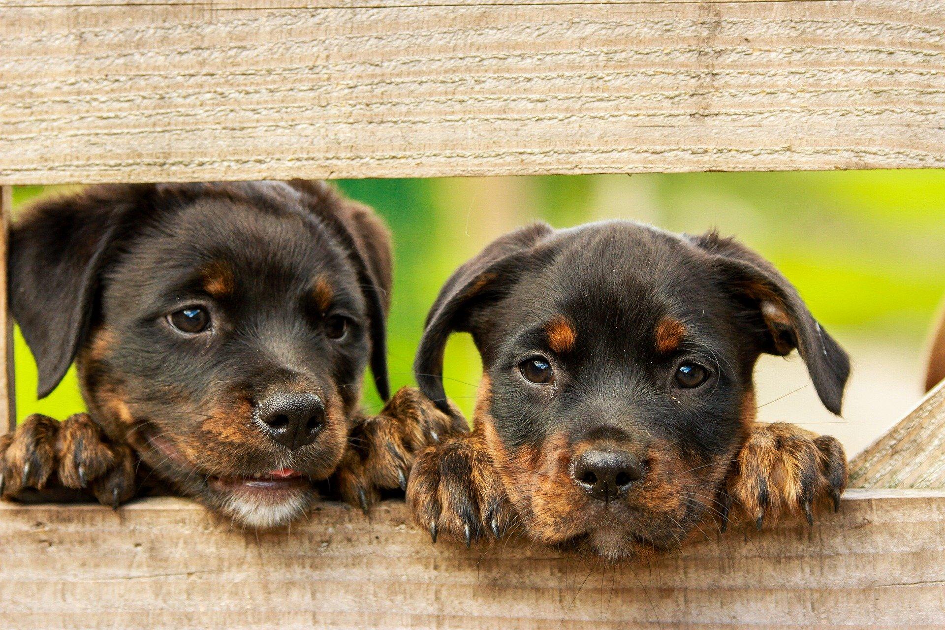 Hundezucht sollte wegen Corona-Krise vorerst pausieren